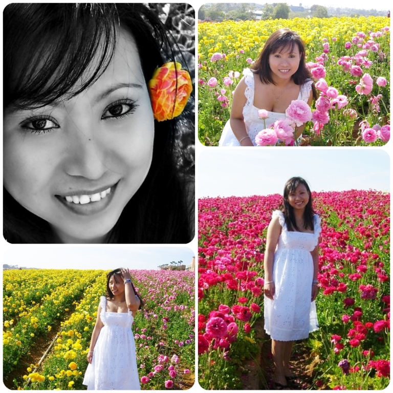 _flower_fields_col