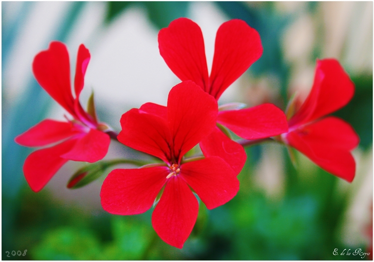 _mss_red_flora