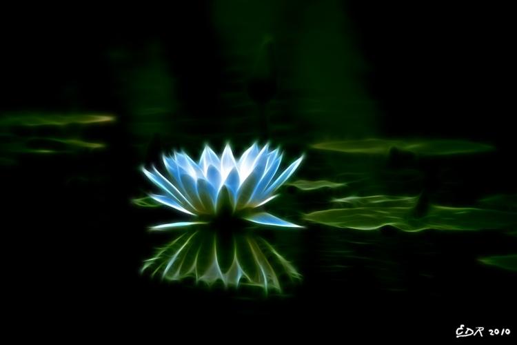 _sig_ok_white_lotus_glow