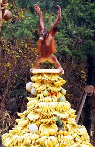 a.aaa-Banana-Master