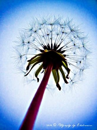 _wishing_plant_sig