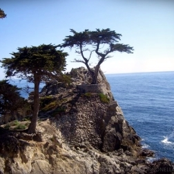 The Lone Cypress, a symbol of the community, as seen from 17-Mile Drive.