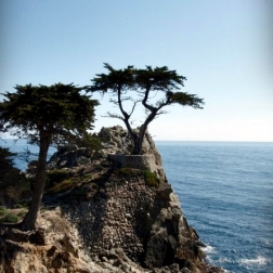 Standing on a granite hillside off California's scenic 17-mile drive in Pebble Beach, the Lone Cypress is a western icon, and has been called one of the most photographed trees in North America. The tree is located between Cypress Point Golf Course and the Pebble Beach Golf Links, two of world's most well known golf courses. Possibly as old as 250 years, the cypress has been scarred by fire and held in place with cables for 65 years. The Monterey Cypress grows naturally only in Pebble Beach and Point Lobos. (Wikipedia)