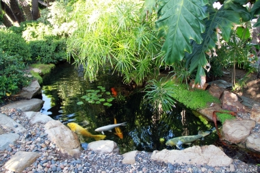 The Koi pond.