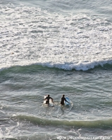Surfer buddies :)