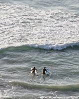 Surfer buddies :)