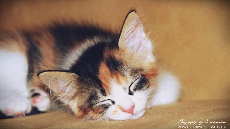 My Princess Leila sleeping soundly.