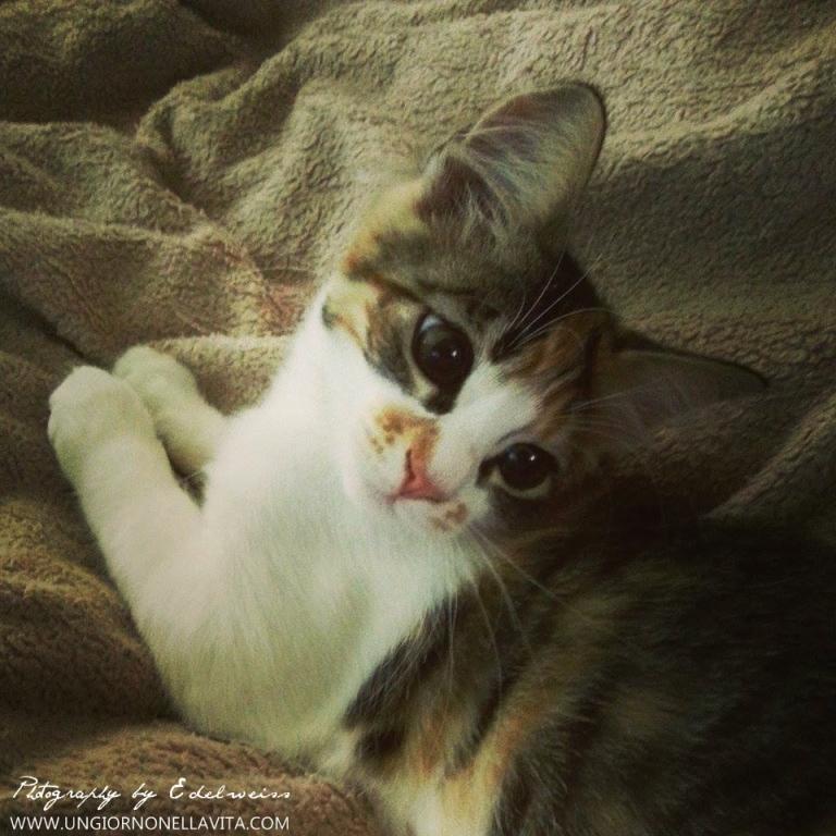 _warmth_Leila
