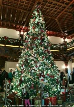 wpid-christmas-tree-2.jpg.jpeg