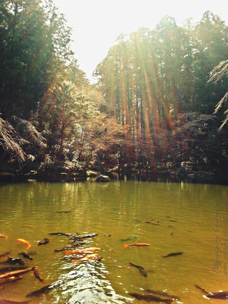 The beautiful Koi (Nishikigoi) Pond at Naritasan Shinshō-ji Temple in Narita, Chiba- Japan.